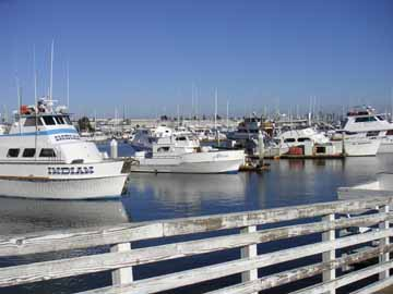 Shelter island a walking tour for Point loma fishing